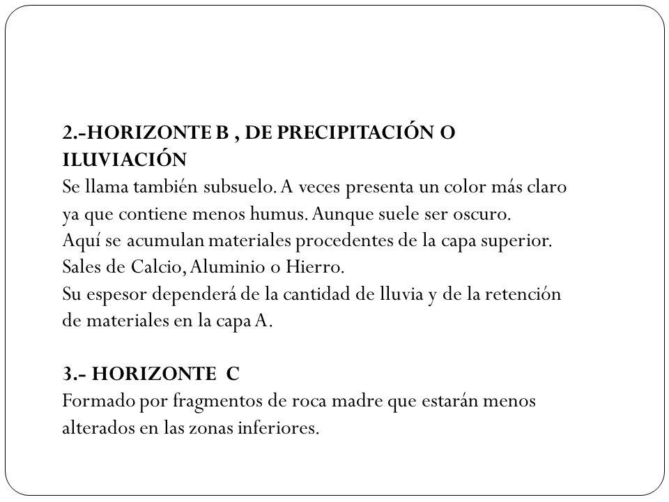 2.-HORIZONTE B, DE PRECIPITACIÓN O ILUVIACIÓN Se llama también subsuelo. A veces presenta un color más claro ya que contiene menos humus. Aunque suele