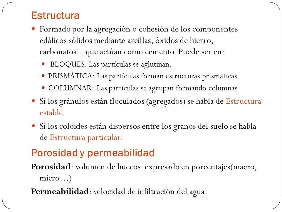 Estructura Formado por la agregación o cohesión de los componentes edáficos sólidos mediante arcillas, óxidos de hierro, carbonatos…que actúan como ce