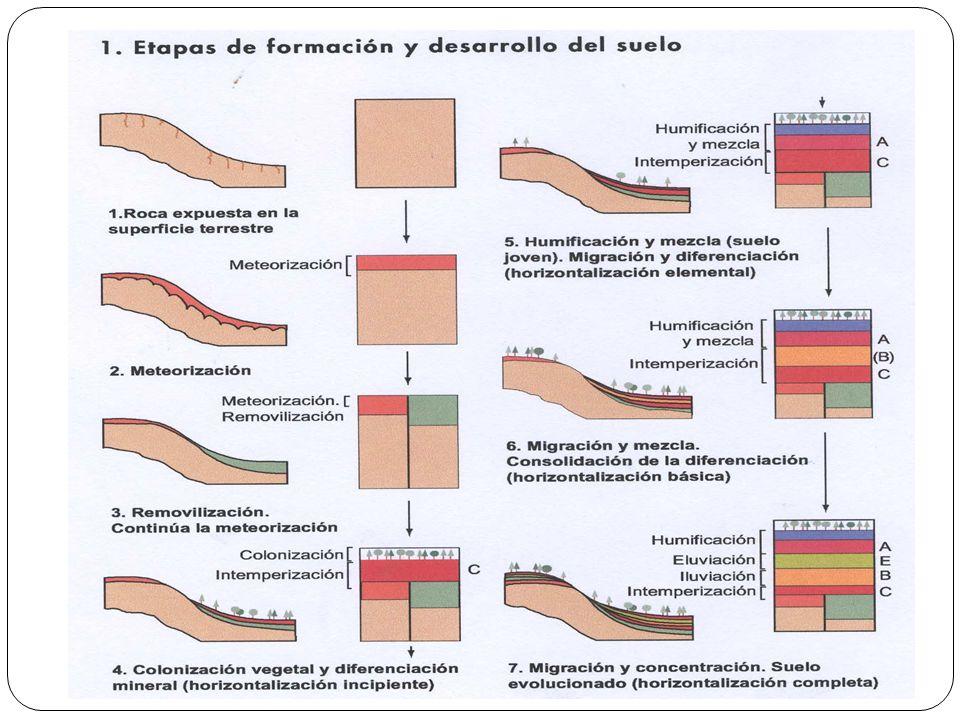Factores formadores del suelo Edafogénesis