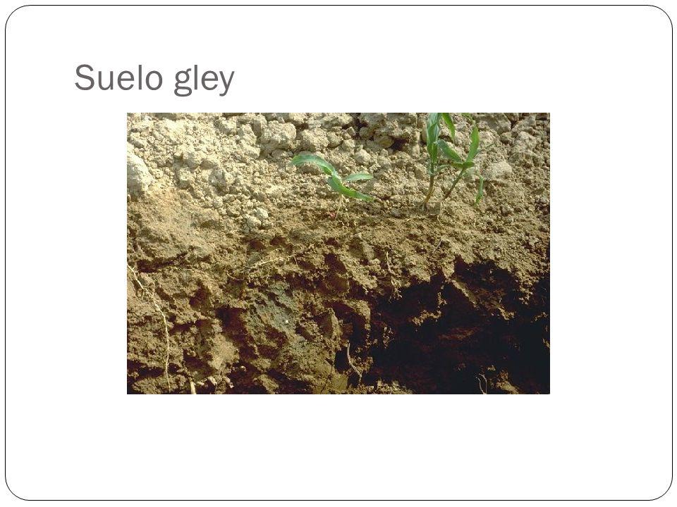 Suelo gley