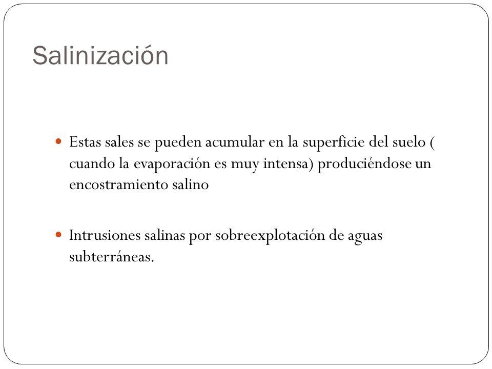 Salinización Estas sales se pueden acumular en la superficie del suelo ( cuando la evaporación es muy intensa) produciéndose un encostramiento salino