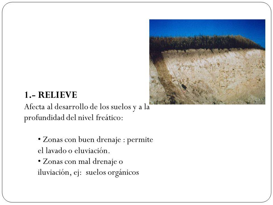 1.- RELIEVE Afecta al desarrollo de los suelos y a la profundidad del nivel freático: Zonas con buen drenaje : permite el lavado o eluviación. Zonas c