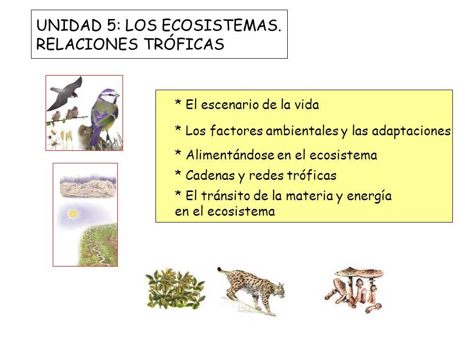 UNIDAD 5: LOS ECOSISTEMAS. RELACIONES TRÓFICAS * El escenario de la vida * Los factores ambientales y las adaptaciones * Alimentándose en el ecosistem