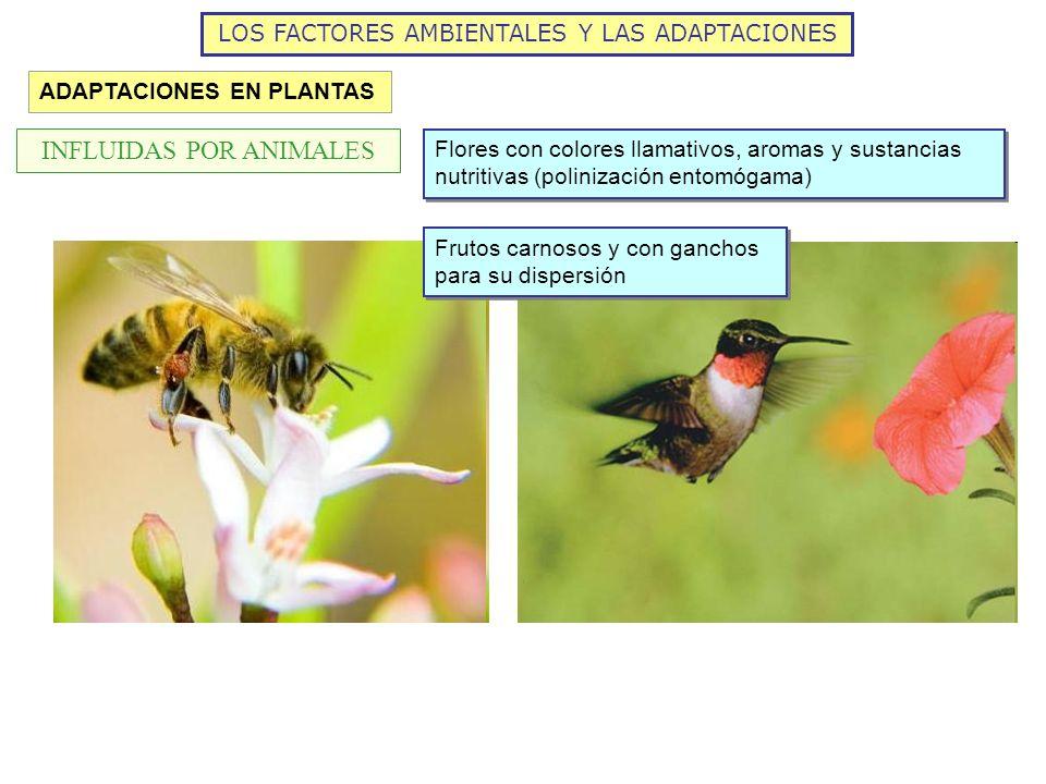 LOS FACTORES AMBIENTALES Y LAS ADAPTACIONES ADAPTACIONES EN PLANTAS INFLUIDAS POR ANIMALES Flores con colores llamativos, aromas y sustancias nutritiv