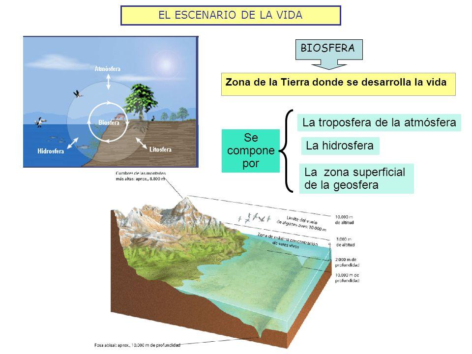 EL ESCENARIO DE LA VIDA BIOSFERA Zona de la Tierra donde se desarrolla la vida Se compone por La troposfera de la atmósfera La hidrosfera La zona supe