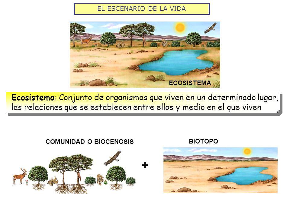 ECOSISTEMA Ecosistema: Conjunto de organismos que viven en un determinado lugar, las relaciones que se establecen entre ellos y medio en el que viven