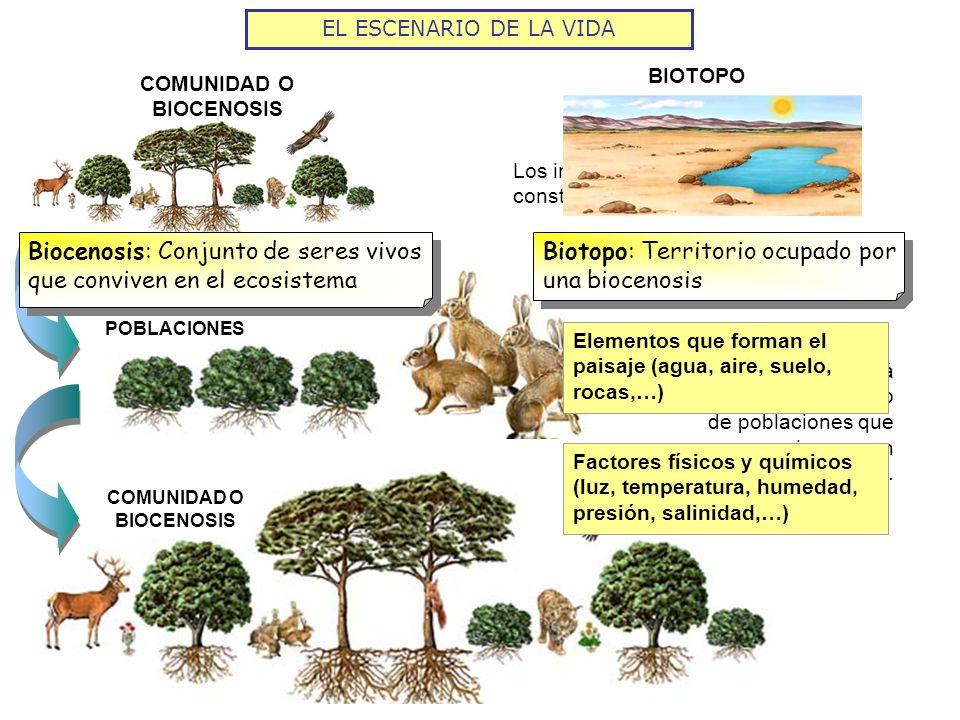 COMUNIDAD O BIOCENOSIS BIOTOPO + EL ESCENARIO DE LA VIDA INTERACCIONES ENTRE SUS COMPONENTES ECOSISTEMA Ecosfera: Ecosistema global, formado por todos los seres vivos de la biosfera y las relaciones entre ellos y con el ambiente