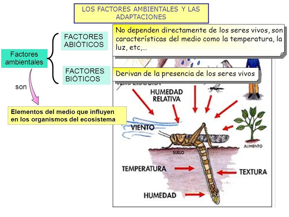 LOS FACTORES AMBIENTALES Y LAS ADAPTACIONES Factores ambientales FACTORES ABIÓTICOS FACTORES BIÓTICOS son Elementos del medio que influyen en los orga