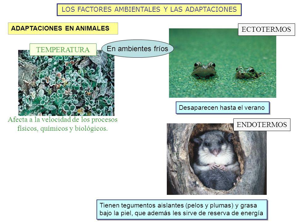 LOS FACTORES AMBIENTALES Y LAS ADAPTACIONES ADAPTACIONES EN ANIMALES Afecta a la velocidad de los procesos físicos, químicos y biológicos. TEMPERATURA