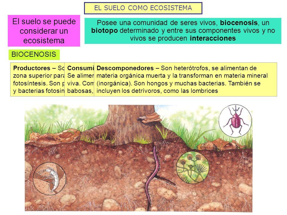 EL SUELO COMO ECOSISTEMA El suelo se puede considerar un ecosistema Posee una comunidad de seres vivos, biocenosis, un biotopo determinado y entre sus