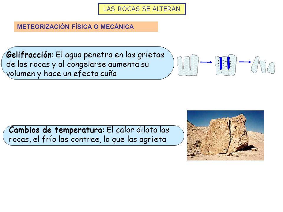 LAS ROCAS SE ALTERAN METEORIZACIÓN QUÍMICA Oxidación: El hierro en presencia de oxígeno se oxida y las rocas pierden consistencia Disolución: Dispersión de los átomos del mineral en el agua.