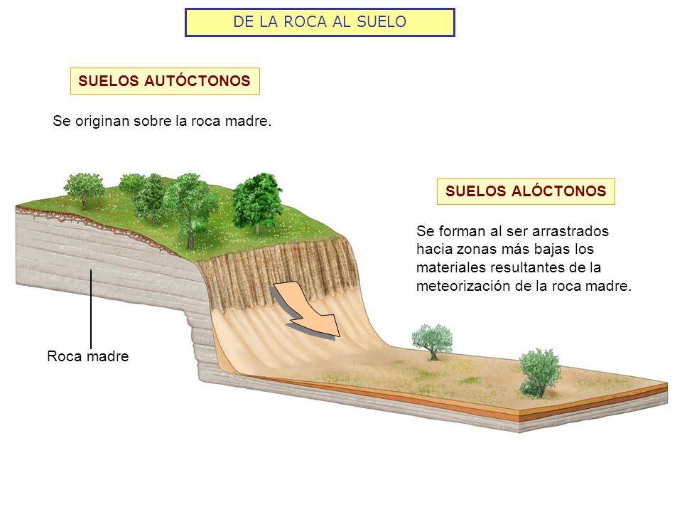 DE LA ROCA AL SUELO El tiempo de formación de un suelo depende de Tipo de roca madre Cuanto más resistente sea la roca se necesitará más tiempo Clima La meteorización química es más intensa en climas húmedos y cálidos Relieve En las laderas los materiales se arrastran fácilmente y resulta difícil la formación de suelo Vegetación Una vegetación abundante ayuda a que se forme más suelo y madure En España la formación de un suelo tarda entre 3.000 y 10.000 años