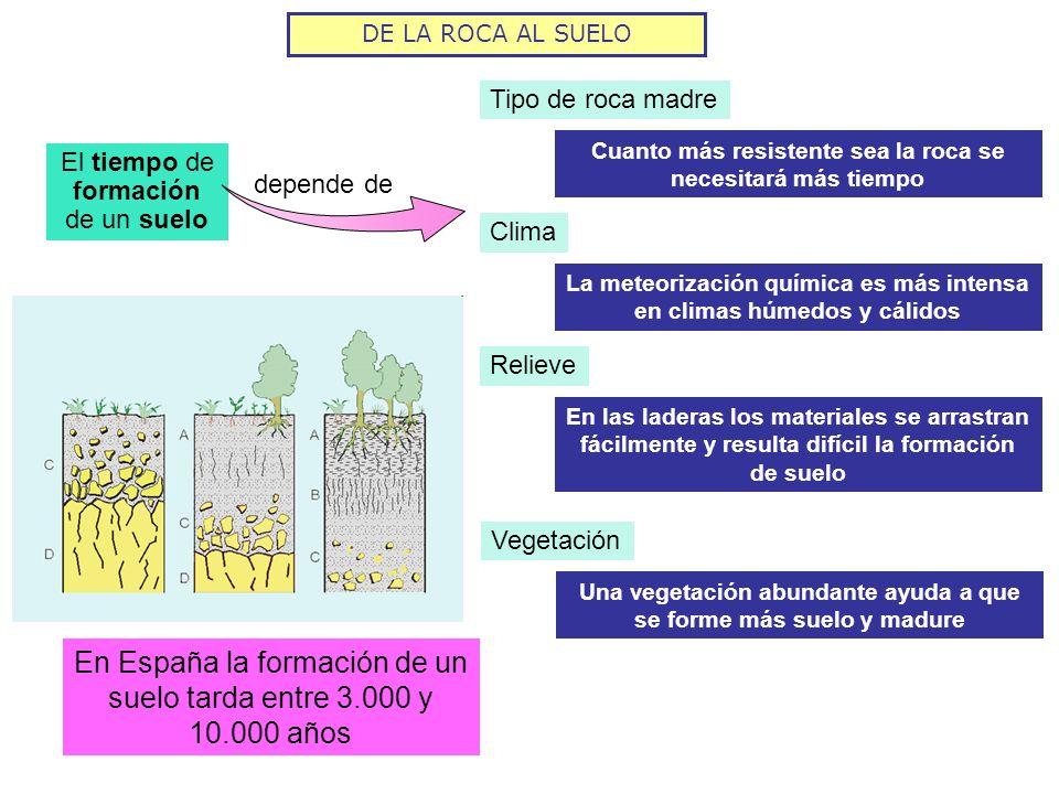 Aire Materia orgánica COMPOSICIÓN DEL SUELO Fragmentos de rocas y minerales Productos de la meteorización de la roca madre.