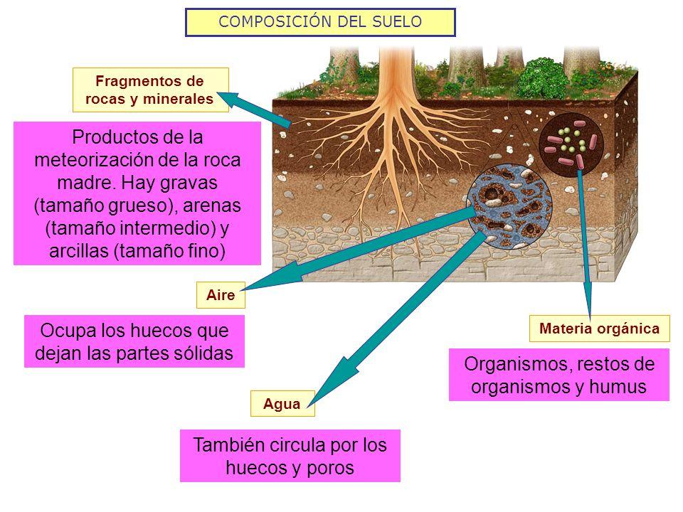 COMPOSICIÓN DEL SUELO El aumento del porcentaje de agua supone una reducción del porcentaje de aire y al revés