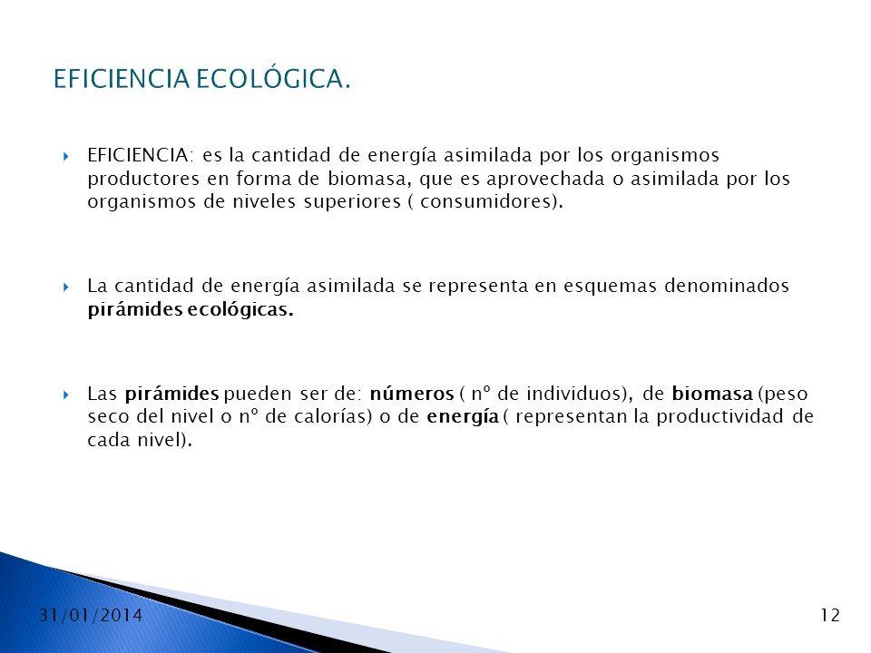 31/01/201412 EFICIENCIA ECOLÓGICA. EFICIENCIA: es la cantidad de energía asimilada por los organismos productores en forma de biomasa, que es aprovech