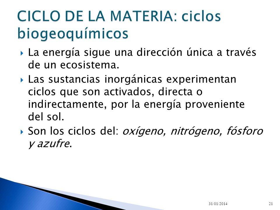 La energía sigue una dirección única a través de un ecosistema. Las sustancias inorgánicas experimentan ciclos que son activados, directa o indirectam
