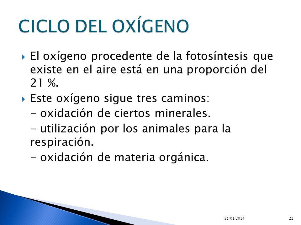 El oxígeno procedente de la fotosíntesis que existe en el aire está en una proporción del 21 %. Este oxígeno sigue tres caminos: - oxidación de cierto
