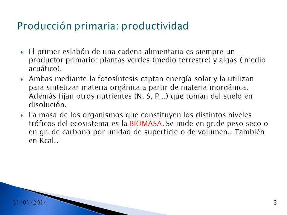 31/01/20143 Producción primaria: productividad El primer eslabón de una cadena alimentaria es siempre un productor primario: plantas verdes (medio ter