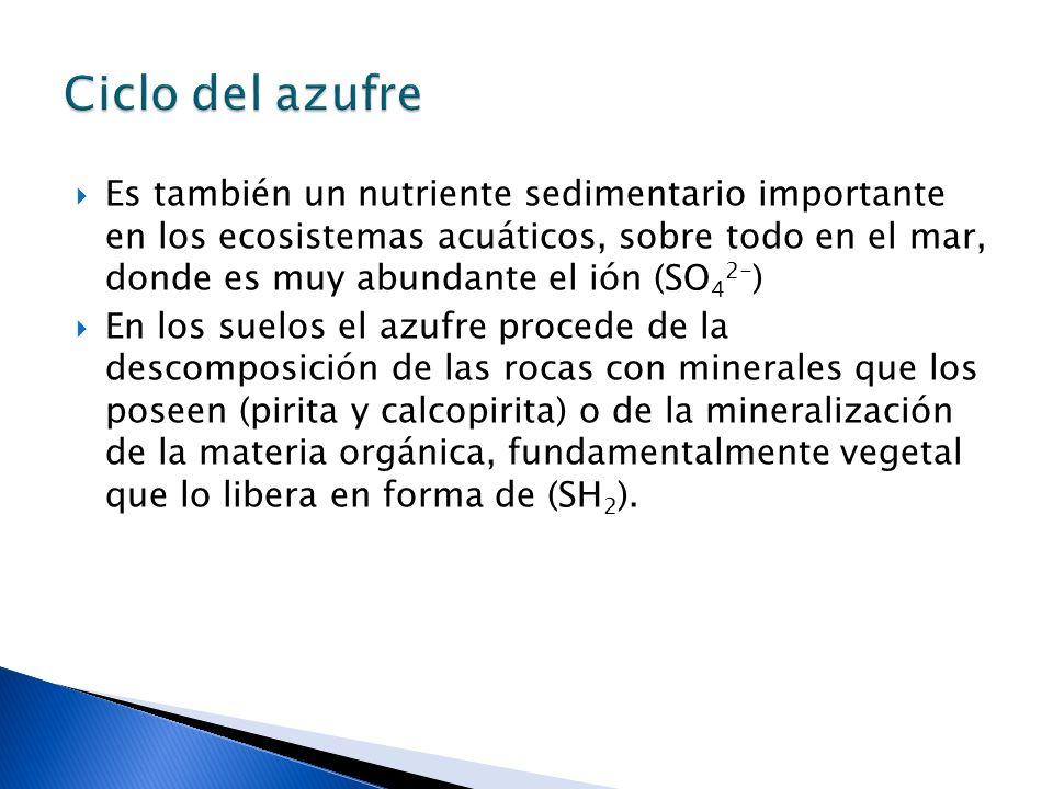 Ciclo del azufre Es también un nutriente sedimentario importante en los ecosistemas acuáticos, sobre todo en el mar, donde es muy abundante el ión (SO