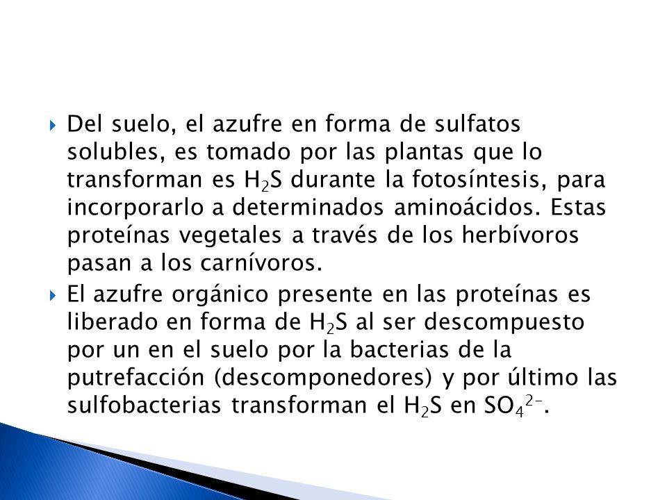 Del suelo, el azufre en forma de sulfatos solubles, es tomado por las plantas que lo transforman es H 2 S durante la fotosíntesis, para incorporarlo a