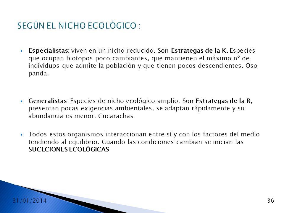 31/01/201436 SEGÚN EL NICHO ECOLÓGICO : Especialistas: viven en un nicho reducido. Son Estrategas de la K. Especies que ocupan biotopos poco cambiante