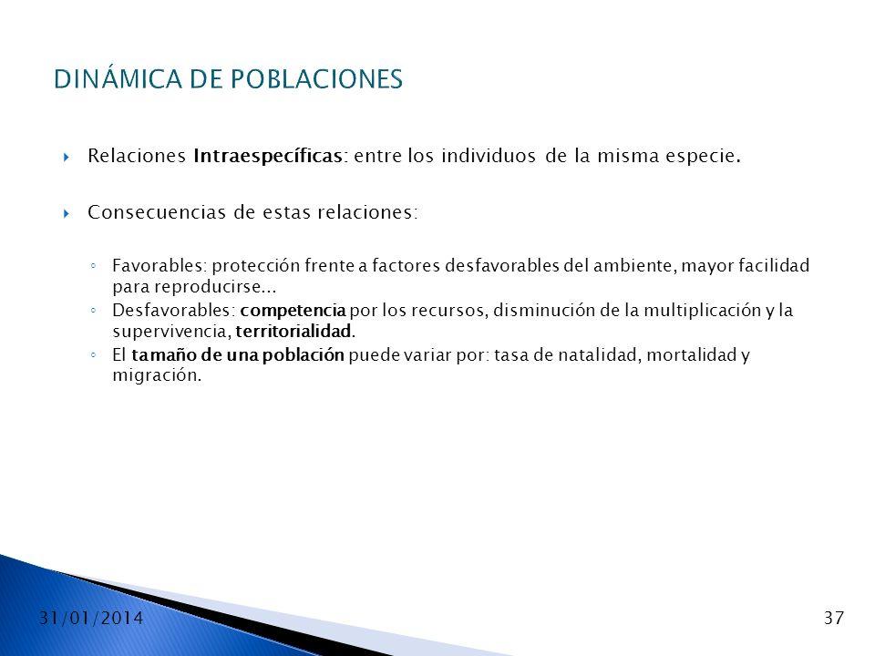 31/01/201437 DINÁMICA DE POBLACIONES Relaciones Intraespecíficas: entre los individuos de la misma especie. Consecuencias de estas relaciones: Favorab