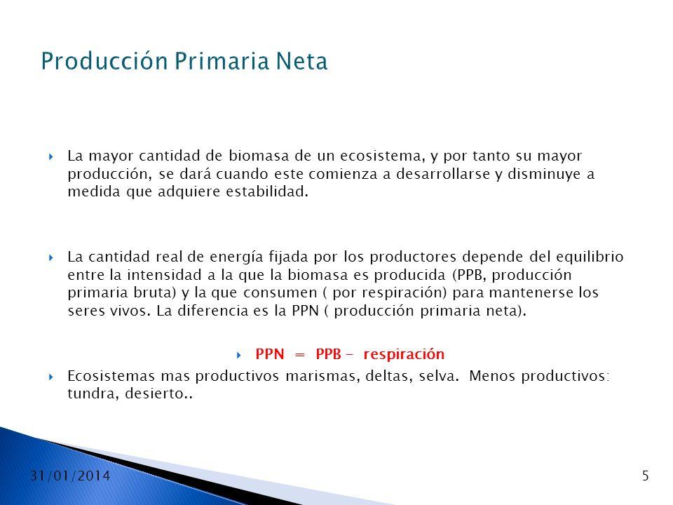 31/01/20145 Producción Primaria Neta La mayor cantidad de biomasa de un ecosistema, y por tanto su mayor producción, se dará cuando este comienza a de