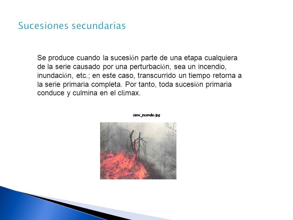 Se produce cuando la sucesi ó n parte de una etapa cualquiera de la serie causado por una perturbaci ó n, sea un incendio, inundaci ó n, etc.; en este