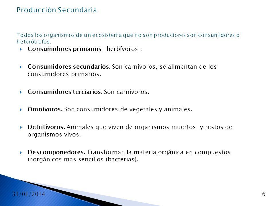 31/01/20146 Producción Secundaria Todos los organismos de un ecosistema que no son productores son consumidores o heterótrofos. Consumidores primarios