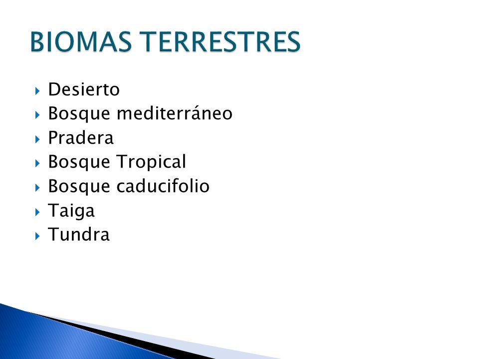 Desierto Bosque mediterráneo Pradera Bosque Tropical Bosque caducifolio Taiga Tundra BIOMAS TERRESTRES