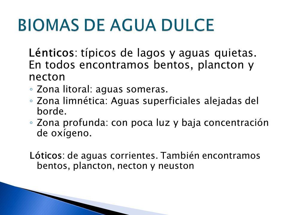 Lénticos: típicos de lagos y aguas quietas. En todos encontramos bentos, plancton y necton Zona litoral: aguas someras. Zona limnética: Aguas superfic