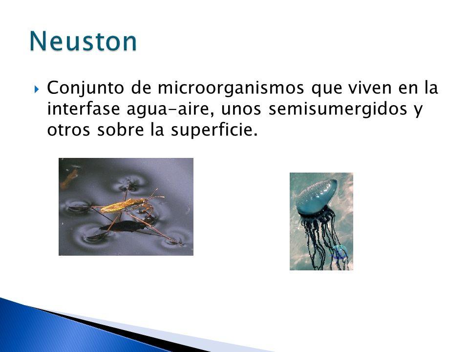 Conjunto de microorganismos que viven en la interfase agua-aire, unos semisumergidos y otros sobre la superficie. Neuston