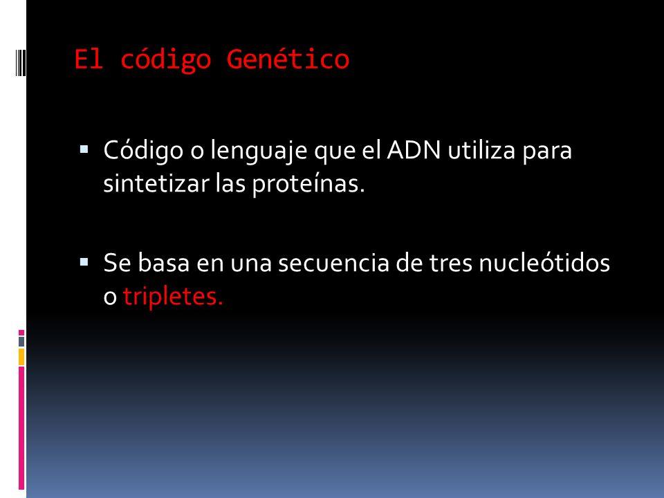 El código Genético Código o lenguaje que el ADN utiliza para sintetizar las proteínas.