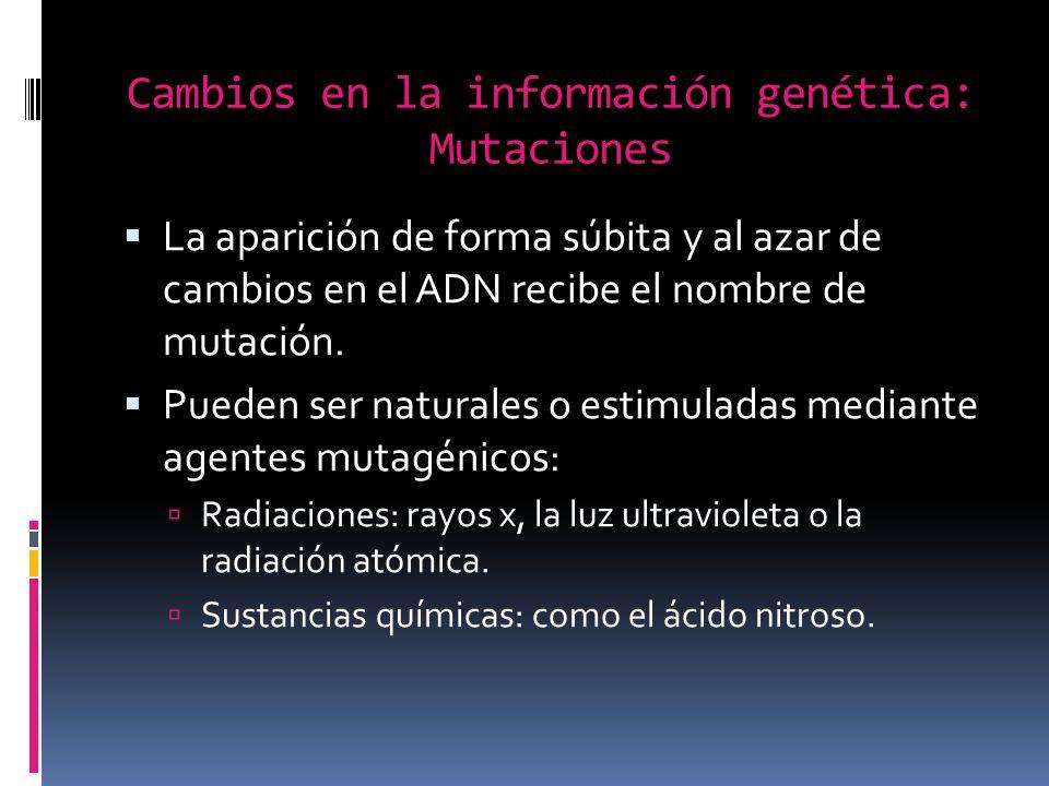 Cambios en la información genética: Mutaciones La aparición de forma súbita y al azar de cambios en el ADN recibe el nombre de mutación.