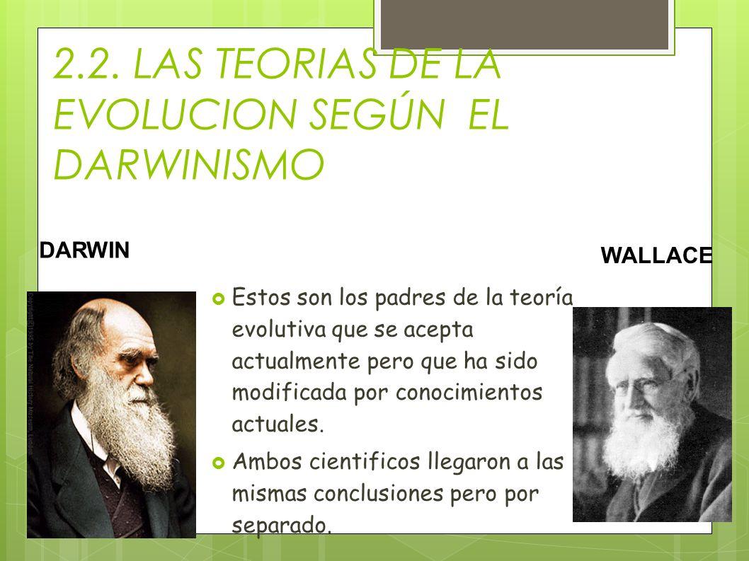 2.2. LAS TEORIAS DE LA EVOLUCION SEGÚN EL DARWINISMO Estos son los padres de la teoría evolutiva que se acepta actualmente pero que ha sido modificada