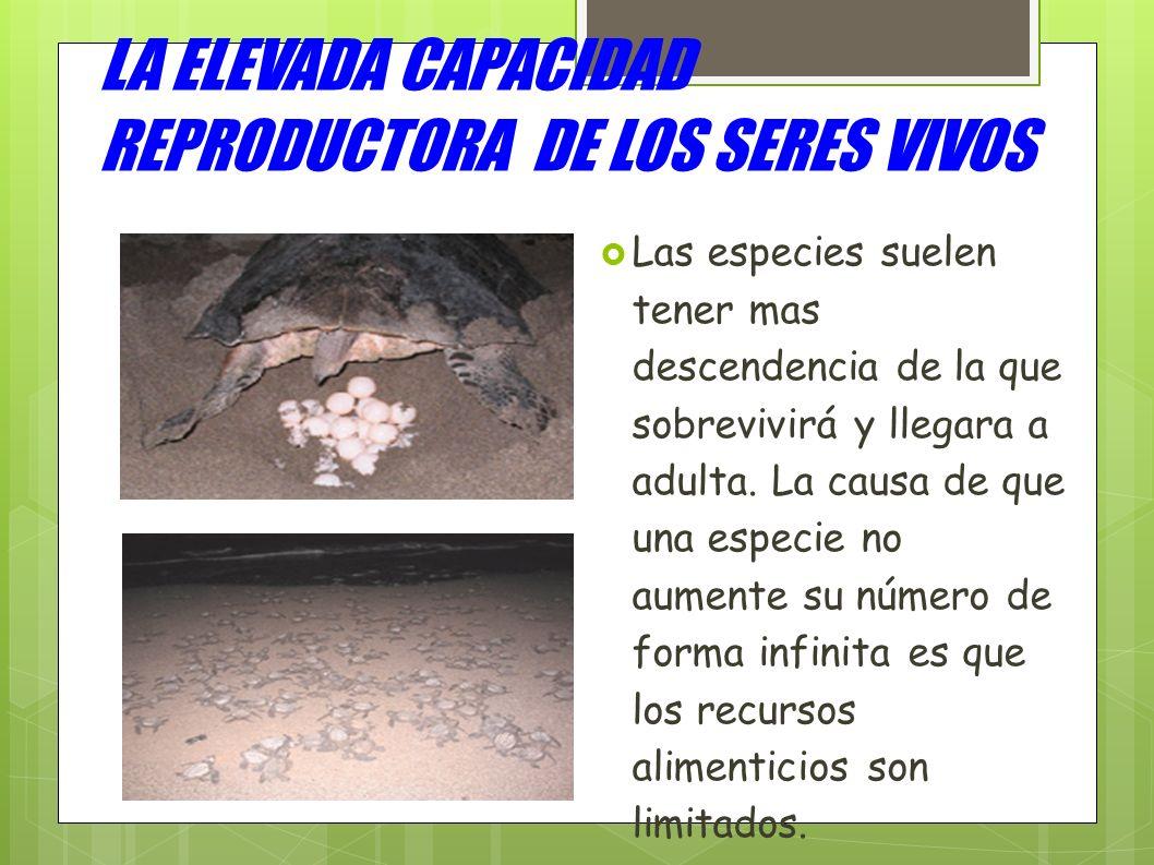 LA ELEVADA CAPACIDAD REPRODUCTORA DE LOS SERES VIVOS Las especies suelen tener mas descendencia de la que sobrevivirá y llegara a adulta. La causa de