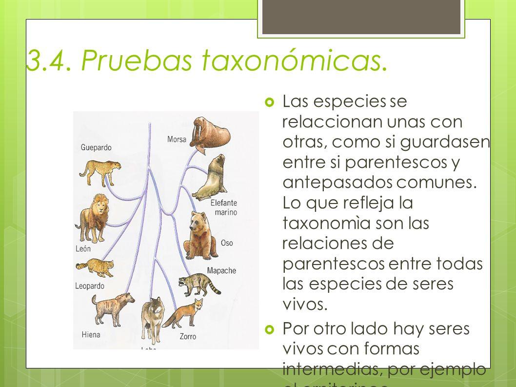 3.4. Pruebas taxonómicas. Las especies se relaccionan unas con otras, como si guardasen entre si parentescos y antepasados comunes. Lo que refleja la