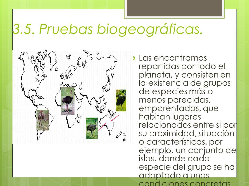 3.5. Pruebas biogeográficas. Las encontramos repartidas por todo el planeta, y consisten en la existencia de grupos de especies más o menos parecidas,