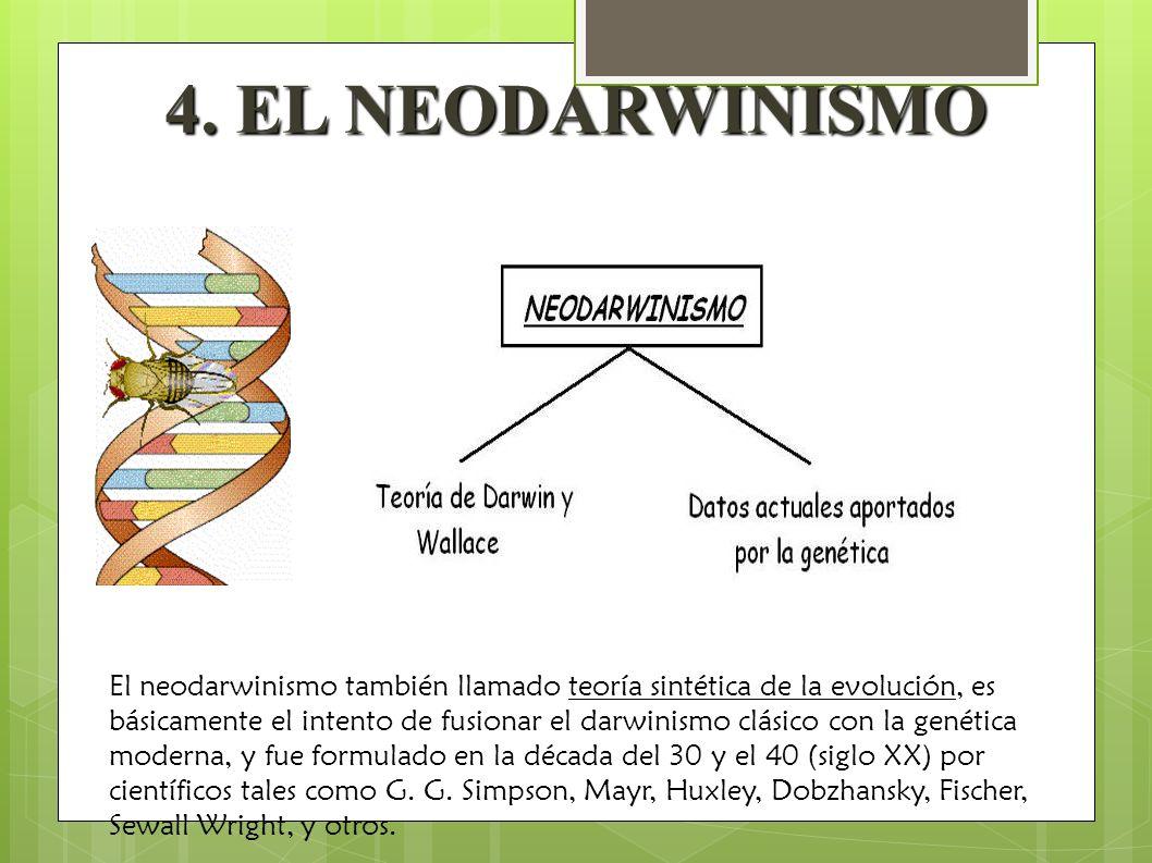 4. EL NEODARWINISMO El neodarwinismo también llamado teoría sintética de la evolución, es básicamente el intento de fusionar el darwinismo clásico con