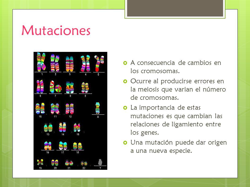 Mutaciones A consecuencia de cambios en los cromosomas. Ocurre al producirse errores en la meiosis que varian el número de cromosomas. La importancia