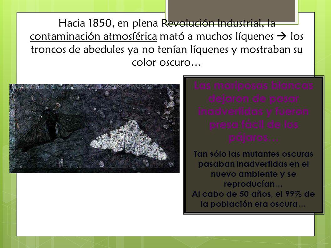 Hacia 1850, en plena Revolución Industrial, la contaminación atmosférica mató a muchos líquenes los troncos de abedules ya no tenían líquenes y mostra
