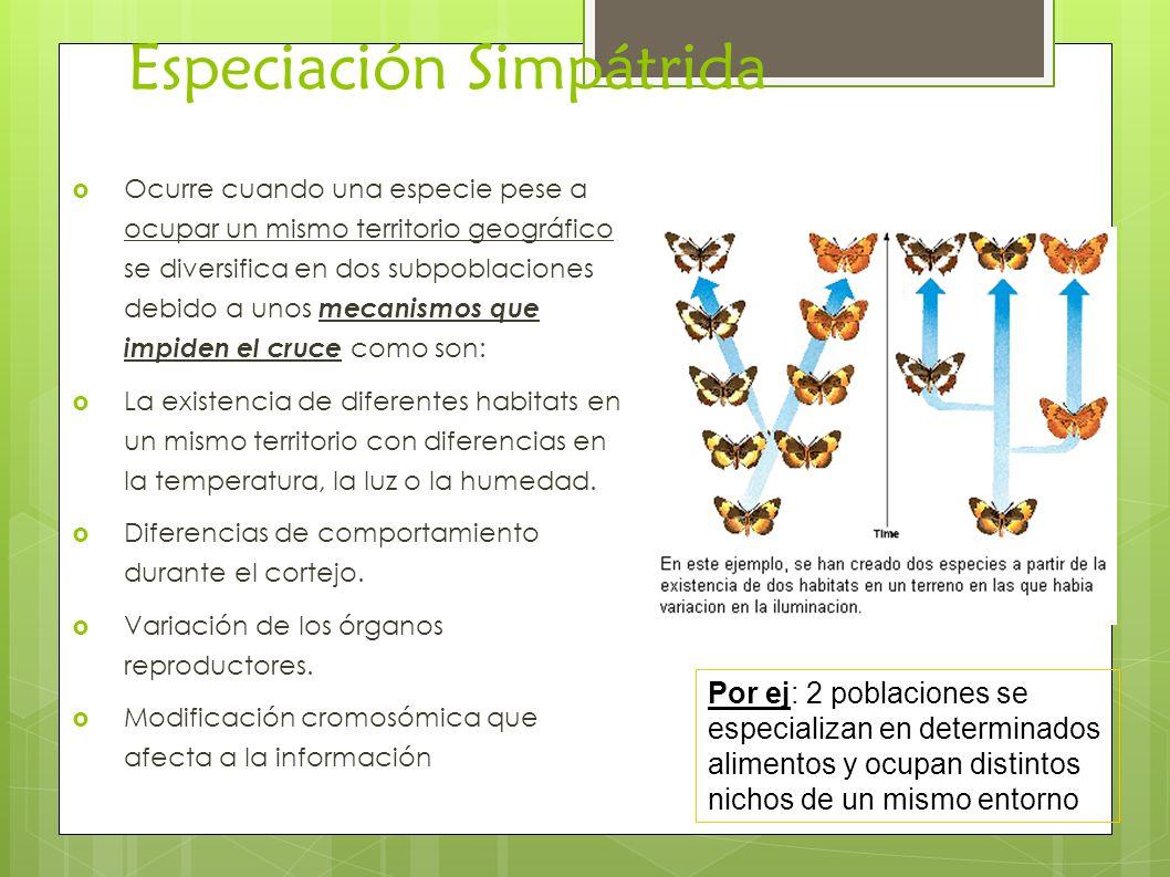 Especiación Simpátrida Ocurre cuando una especie pese a ocupar un mismo territorio geográfico se diversifica en dos subpoblaciones debido a unos mecan