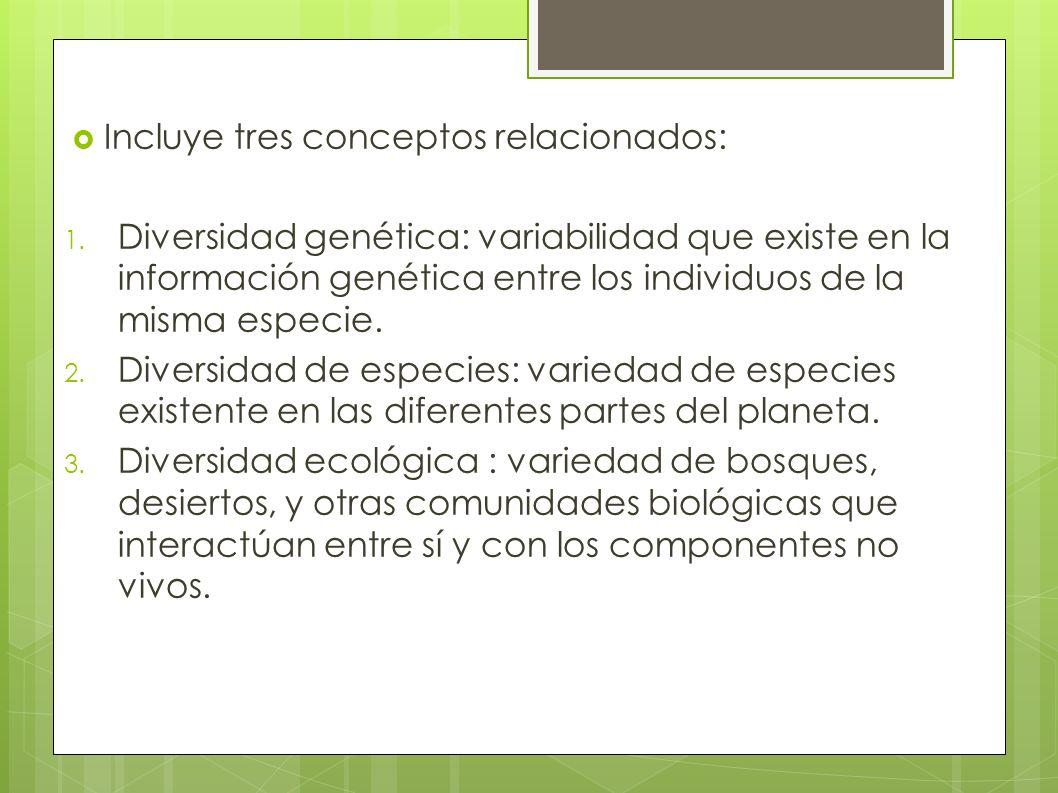 Incluye tres conceptos relacionados: 1. Diversidad genética: variabilidad que existe en la información genética entre los individuos de la misma espec