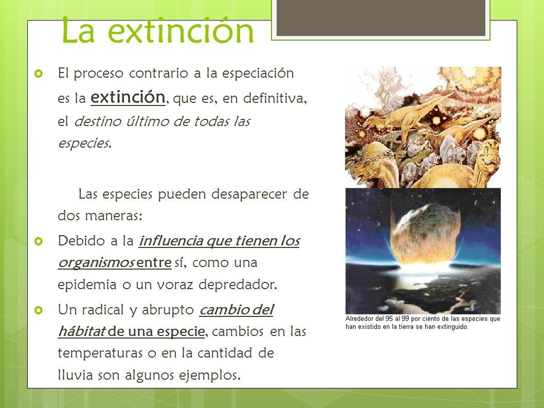 La extinción El proceso contrario a la especiación es la extinción, que es, en definitiva, el destino último de todas las especies. Las especies puede