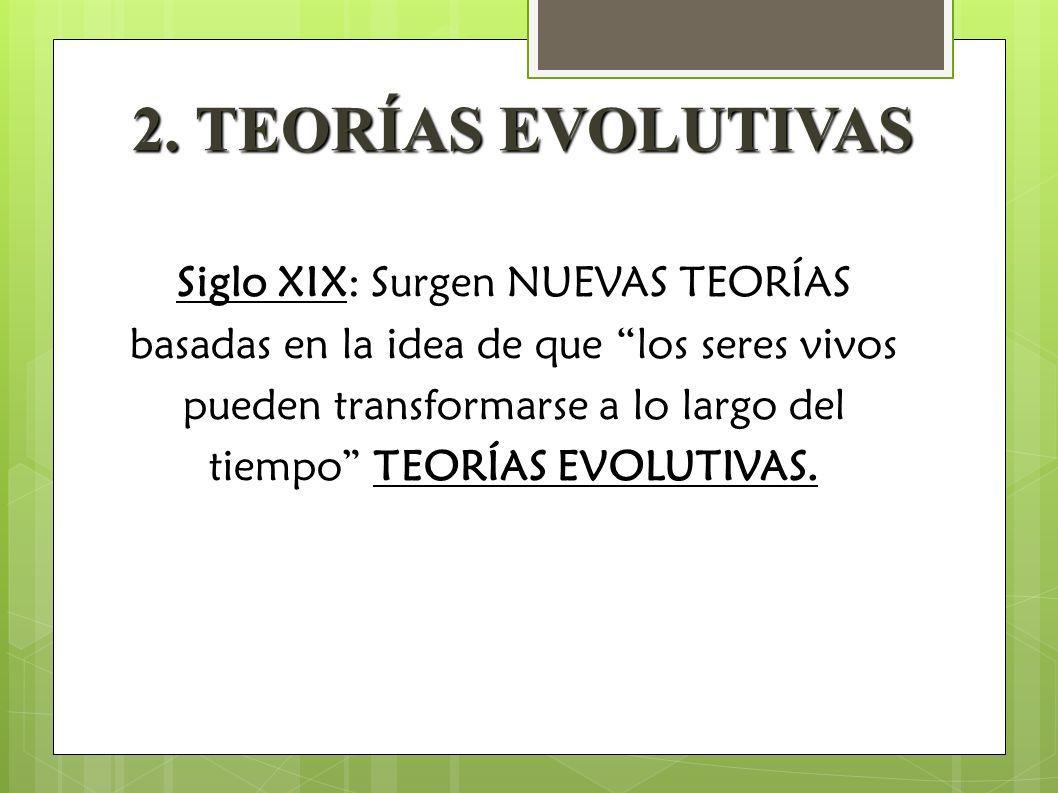 2. TEORÍAS EVOLUTIVAS Siglo XIX: Surgen NUEVAS TEORÍAS basadas en la idea de que los seres vivos pueden transformarse a lo largo del tiempo TEORÍAS EV