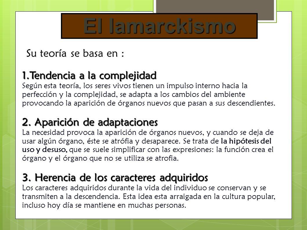 3.3.Pruebas bioquímicas.