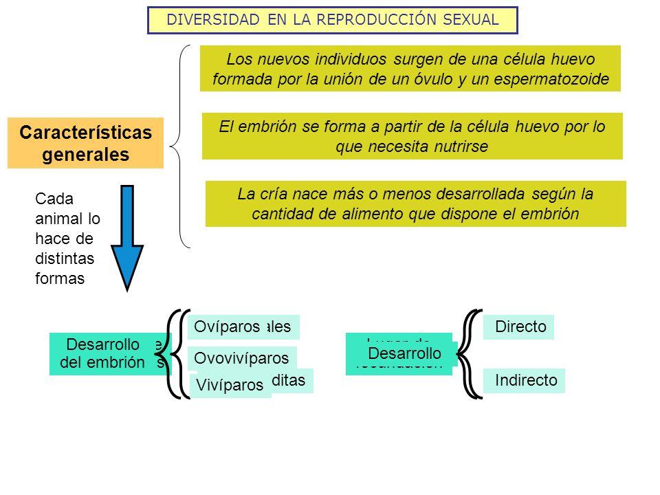 DIVERSIDAD EN LA REPRODUCCIÓN SEXUAL Características generales Los nuevos individuos surgen de una célula huevo formada por la unión de un óvulo y un