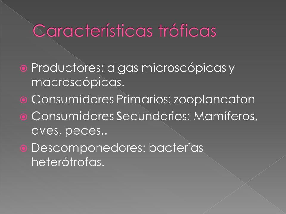 Productores: algas microscópicas y macroscópicas. Consumidores Primarios: zooplancaton Consumidores Secundarios: Mamíferos, aves, peces.. Descomponedo