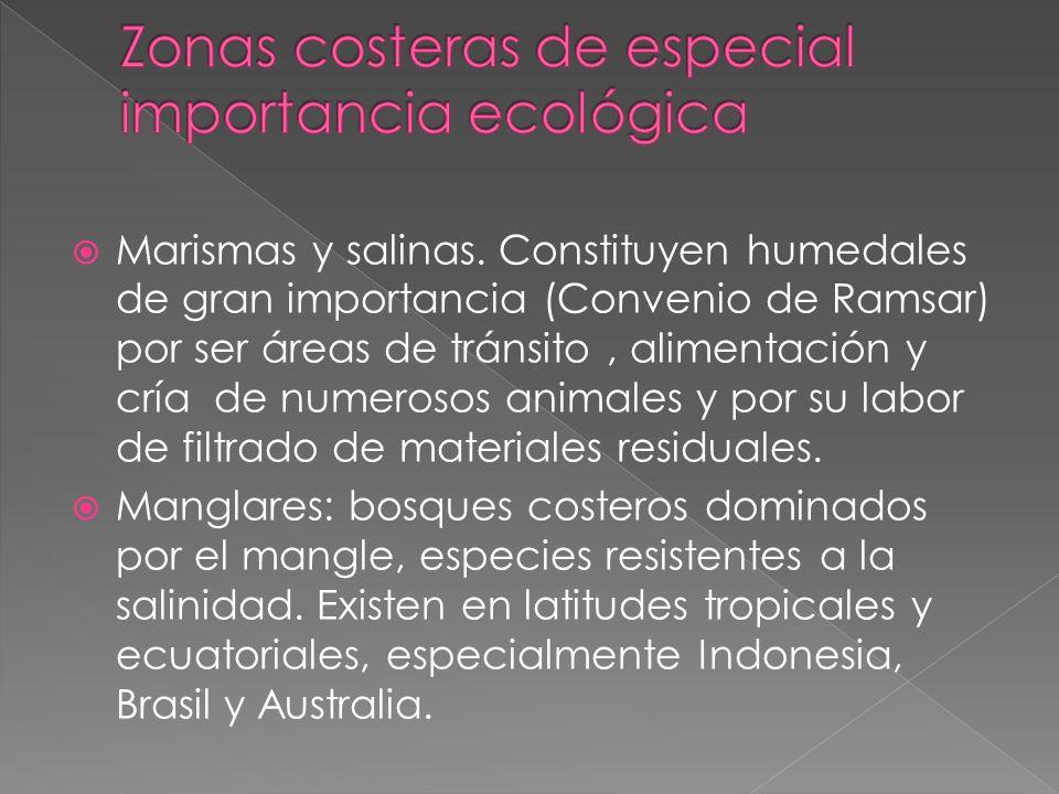 Marismas y salinas. Constituyen humedales de gran importancia (Convenio de Ramsar) por ser áreas de tránsito, alimentación y cría de numerosos animale