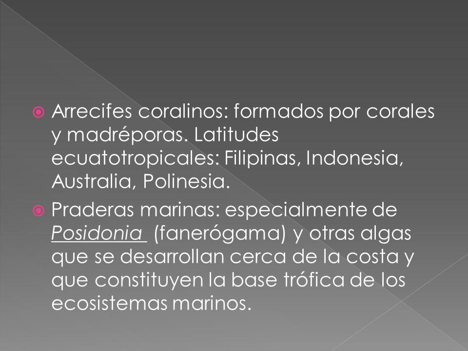 Arrecifes coralinos: formados por corales y madréporas. Latitudes ecuatotropicales: Filipinas, Indonesia, Australia, Polinesia. Praderas marinas: espe